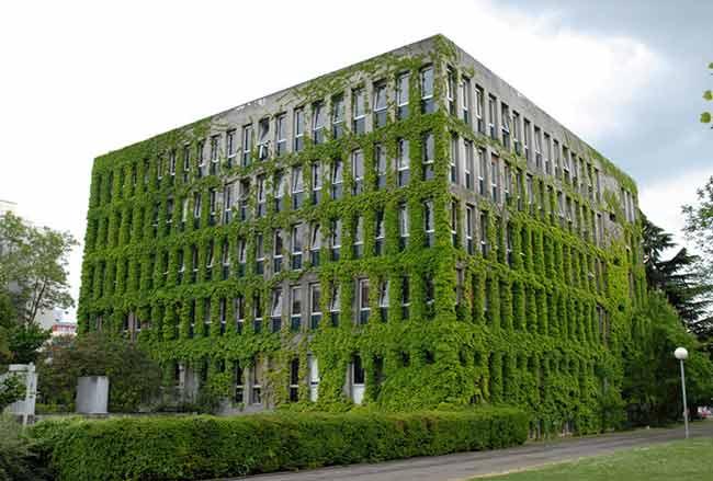 Lierre Sur Facade Façade en Lierre Univerisité
